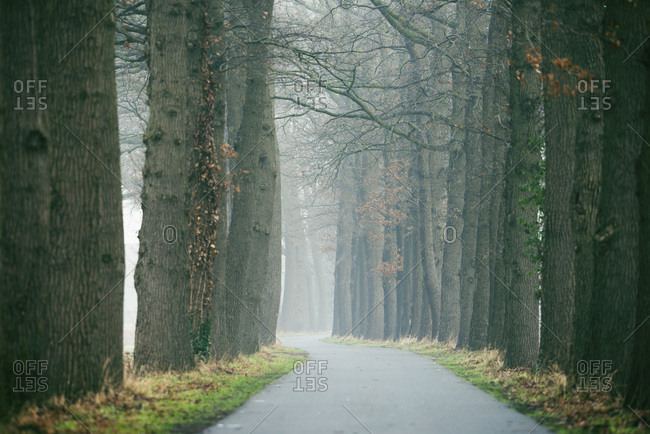 Winding rural road in mist with bare trees on both sides.
