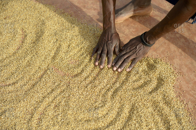 Burkina Faso - village Koungo - woman spreading out sorghum grains to dry in the sunshine