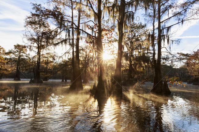 USA - Texas - Louisiana - Caddo Lake - Benton Lake - bald cypress forest