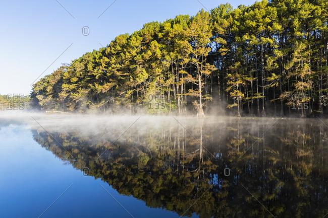 USA - Texas - Louisiana - Caddo Lake - Big Cypress Bayou - bald cypress forest