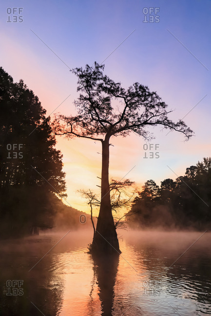 USA - Texas - Louisiana - Caddo Lake - Big Cypress Bayou - bald cypress forest at sunrise