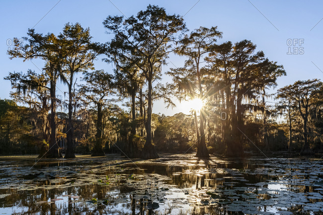 USA - Texas - Louisiana - Caddo Lake State Park - Saw Mill Pond - bald cypress forest