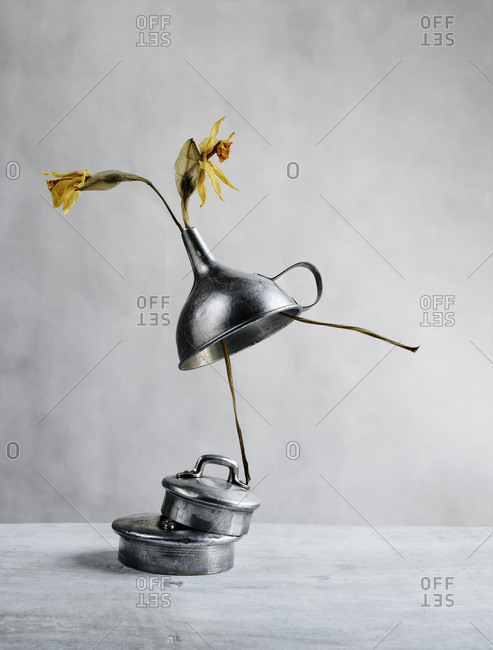 Still life with withered daffodils and funnel