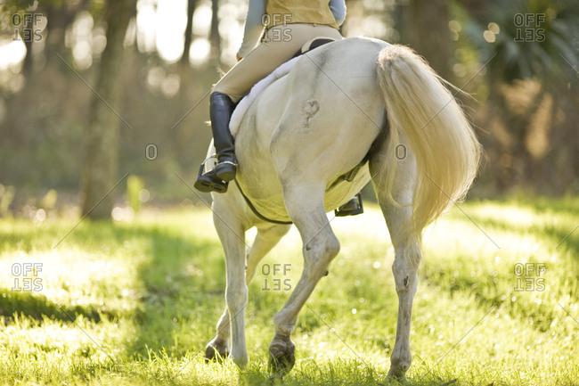 Woman riding a white horse