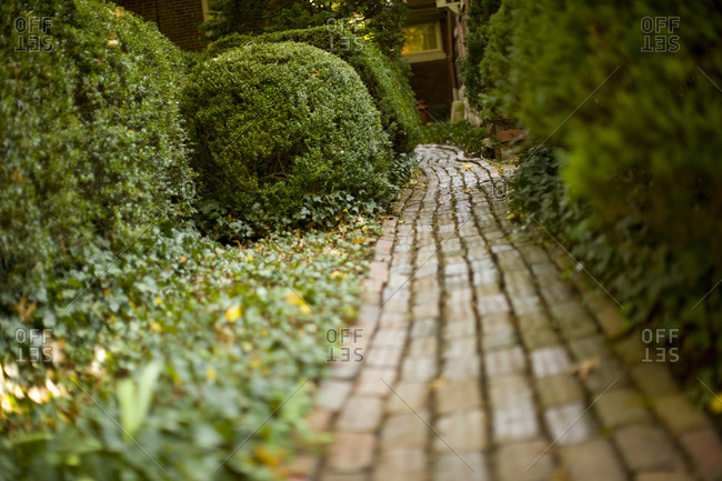 Footpath between hedges - Offset Collection