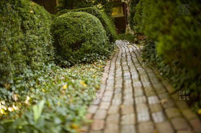 Footpath between hedges