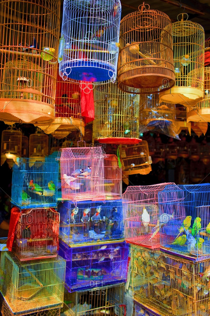 Colorful bird cages at a pet shop
