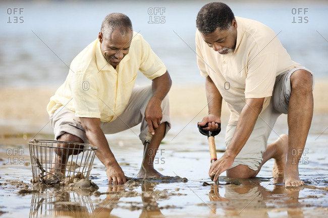 Men digging for shellfish at a beach