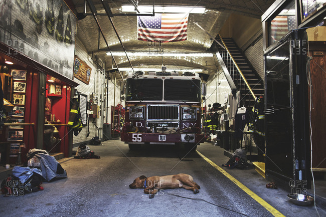 New York, United States of America - September 22, 2014. A dog is relaxing at the garage of a fire department station in New York City.
