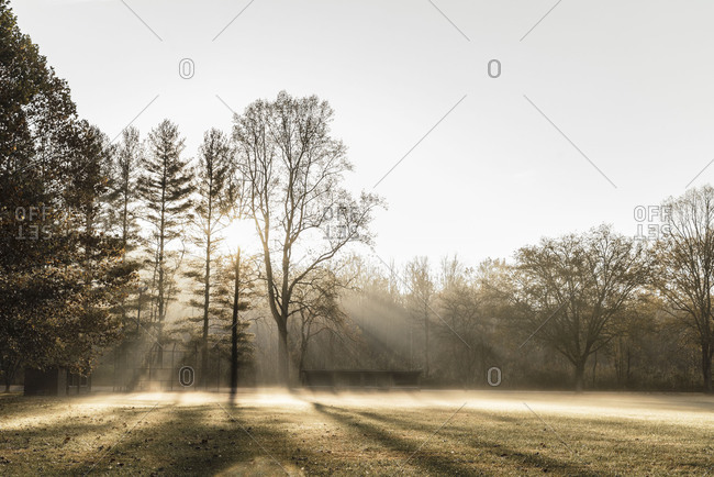 Trees casting shadows on a foggy field in morning