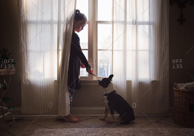 Girl feeding dog in the curtains