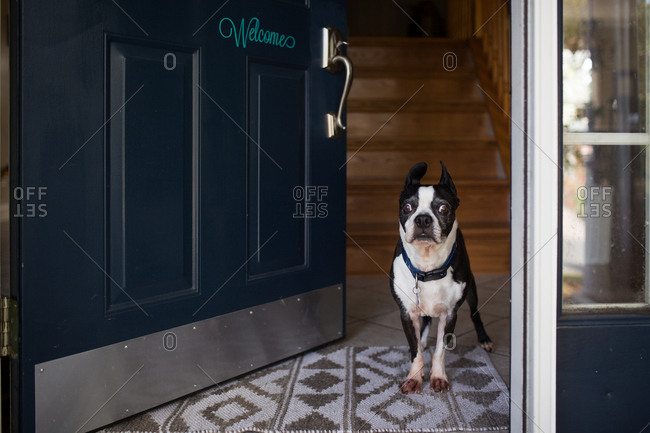 Dog standing at front door with welcome sign
