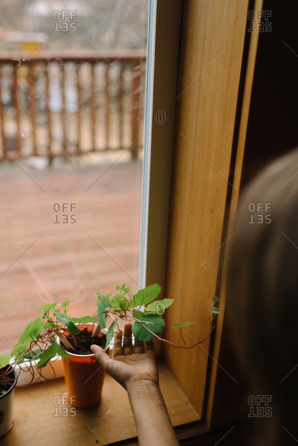 Child checking seedling growing on windowsill