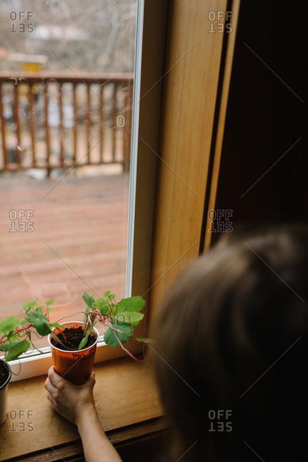 Child caring for plants on windowsill