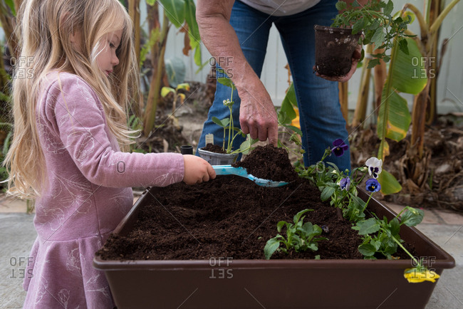 Little girl helping plant a backyard garden
