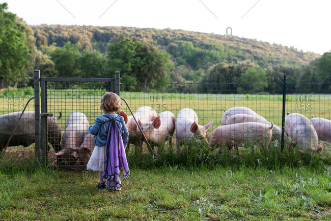 Young girl dressed up in butterfly wings watching pigs on a farm