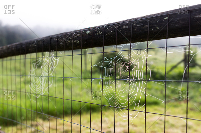 Spider web on a fence in the early morning