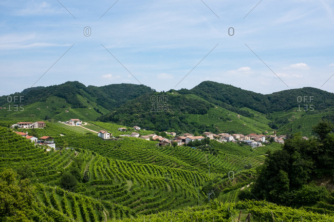 The prosecco vineyards of Italy