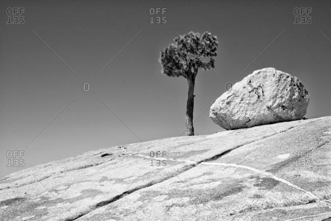 Tree and boulder on rock, Yosemite
