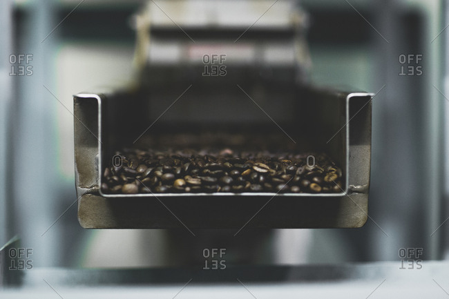 Roasted coffee beans in chute