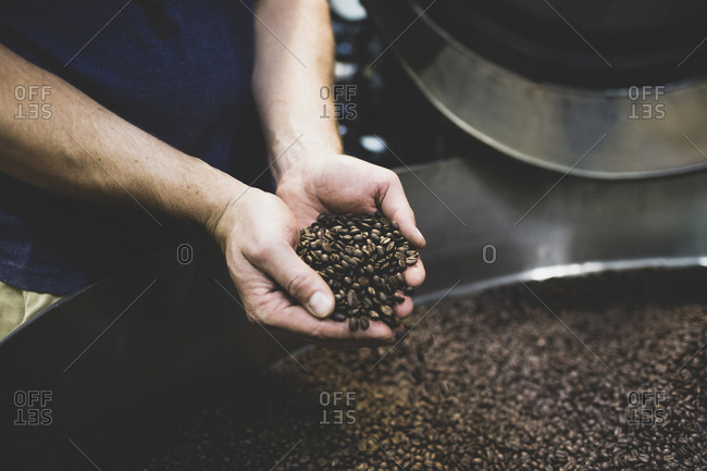 Man holding handful of roasted coffee beans