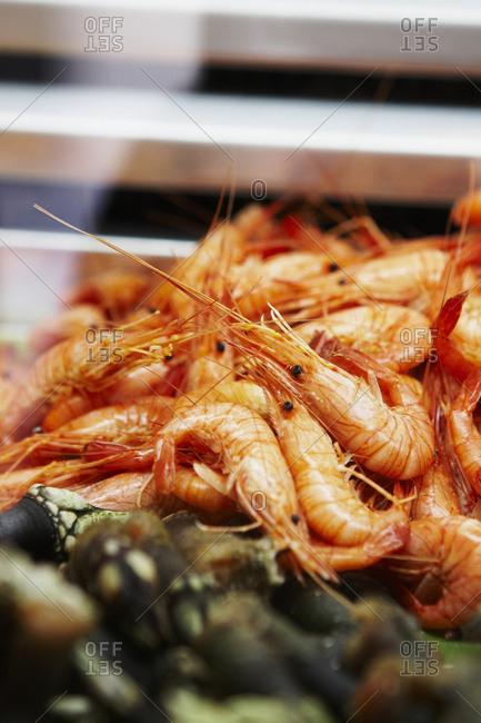 Shrimp at fish market