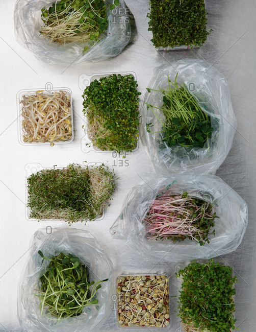 Variety of sprouts in plastic bags and containers