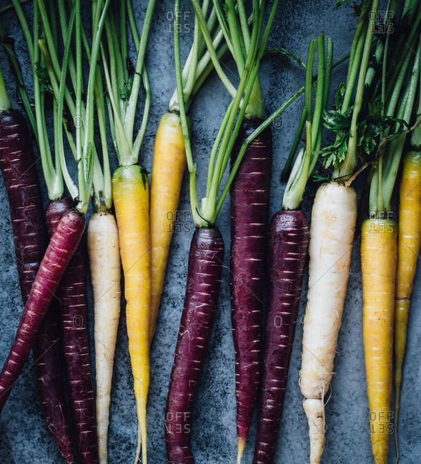 Carrots of various colors