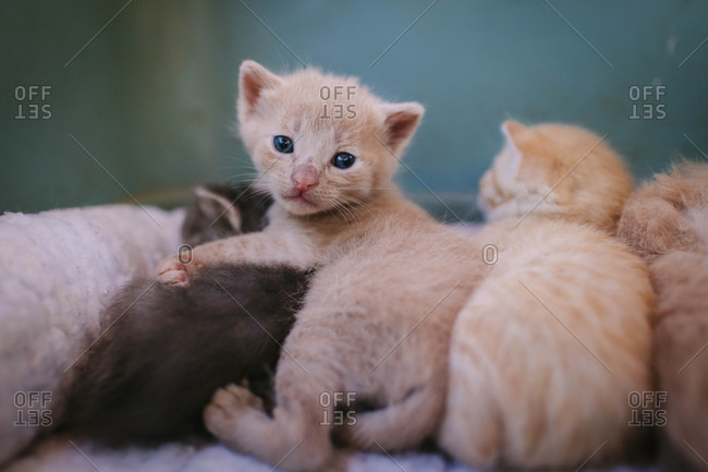 Kitten awake among sleeping siblings
