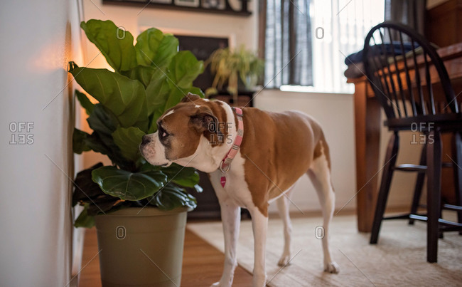 Dog smelling a house plant