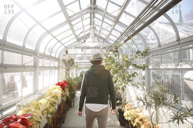 Man in greenhouse with poinsettias