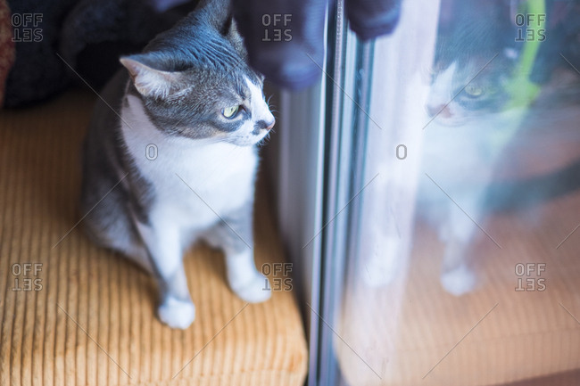 Cat staring out glass door