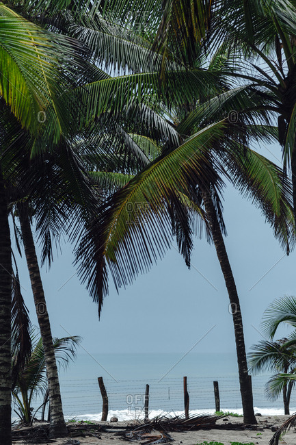 Scenic view of the Caribbean Sea surrounded by palm trees and a  wooden fence on a cloudy day