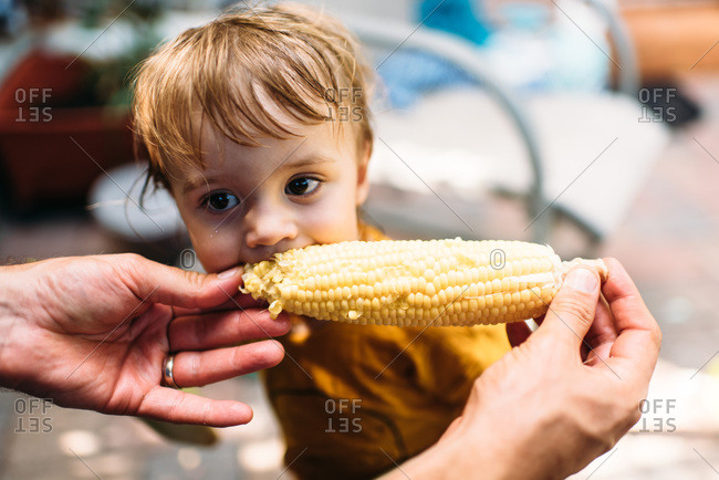 Toddler girl eating corn on the cob held by her father.