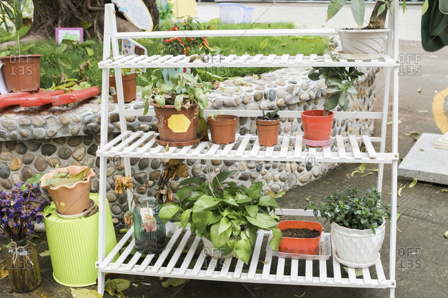 Potted plants on outdoor shelving