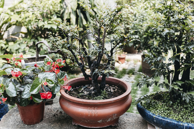 Potted plants in a Chinese garden, in Guangzhou, China