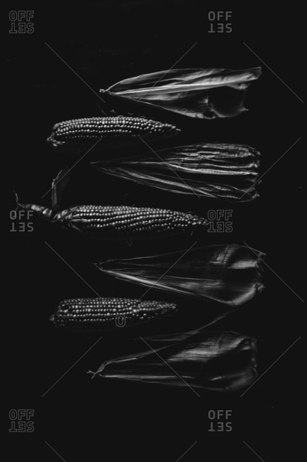 Corn cobs and leaves in arrangement