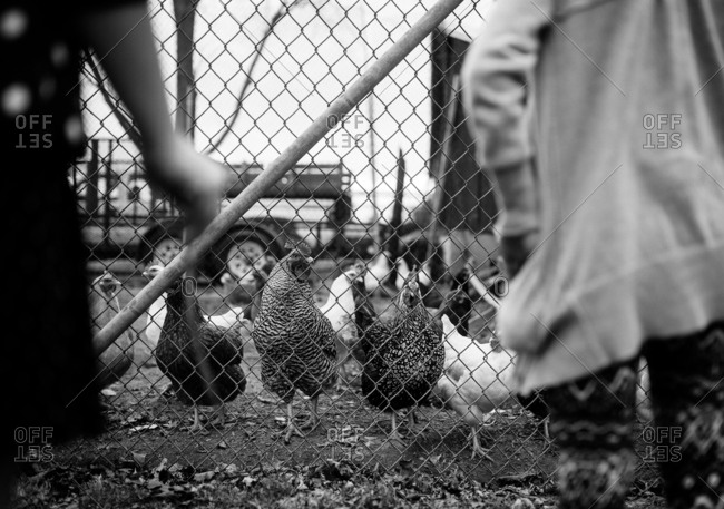 black and white of girl in front of chickens