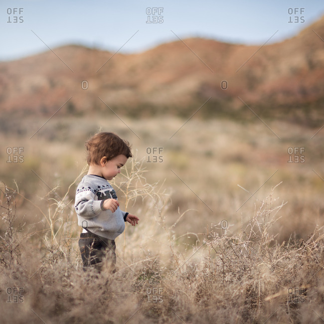 Toddler boy in autumnal mountain field