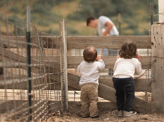 Boys watching man in farm pen