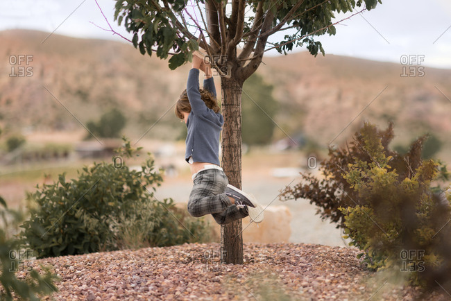 Toddler boy hanging from tree branch