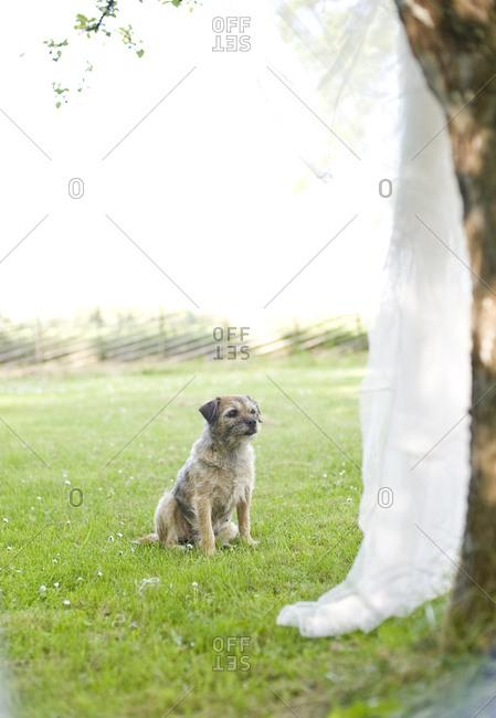 Dog sitting in garden - Offset