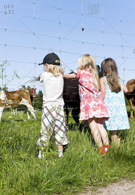 Children looking at cows on pasture