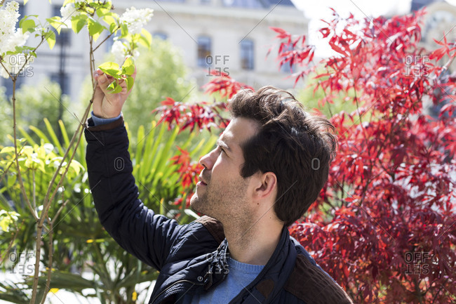 Man inspecting a blooming maple