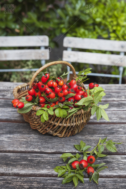 Wicker basket of rosehips on garden table