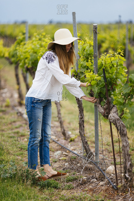 Woman checking the grapes plants