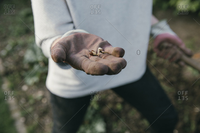 Hand of gardening woman holding a germ bud- close-up