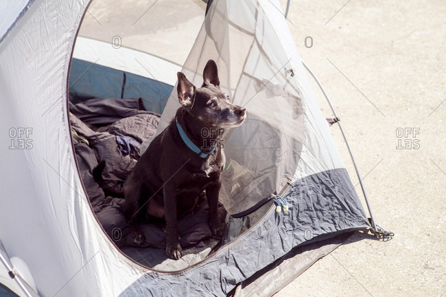 High angle view of dog looking away while sitting in tent during sunny day
