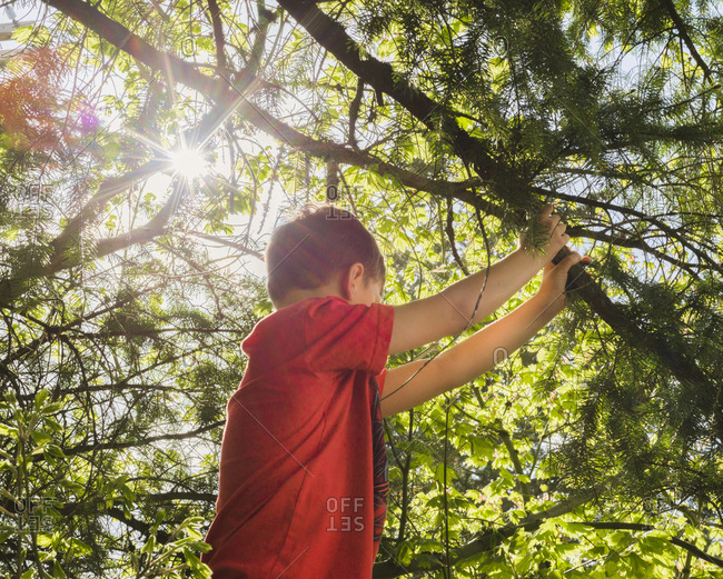 Side view of boy holding branch in forest during sunny day