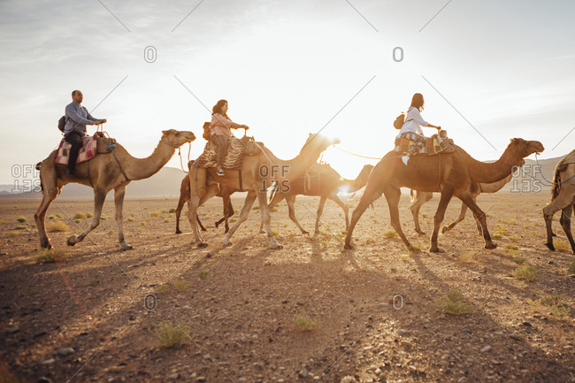 Tourists riding on camels at desert against sky during sunny day